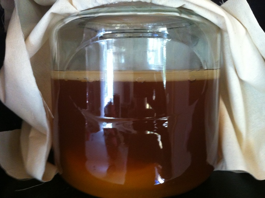 Kombucha mother and scoby